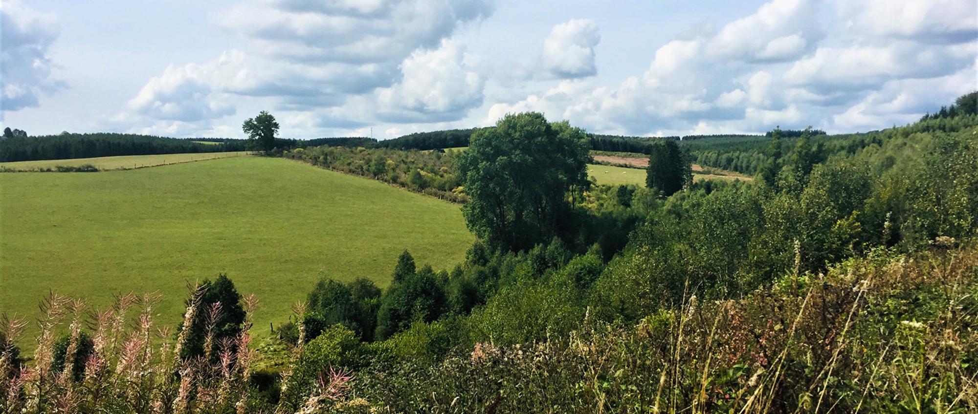 Parc naturel Haute-Sûre Forêt d'Anlier
